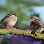 Bird couple no fault divorce